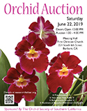 Color 2019 OSSC Orchid Auction Poster