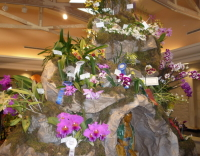 Click to see large photo of OSSC's 2008 Southland Orchid Show display